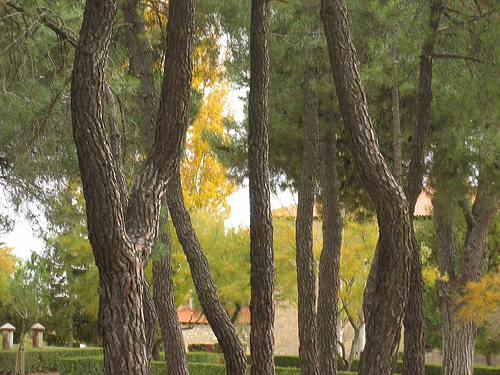 Organizacións de toda a cadea da madeira emprazan ó Goberno a incluir na Ley de Montes, a debate no Senado, medidas que incentiven a xestión forestal sostible