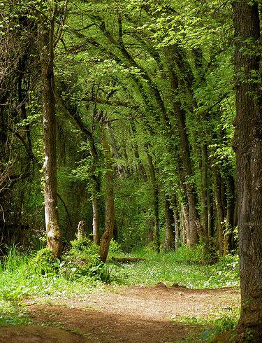 Nuestros bosques están abandonados ante los grandes incendios forestales