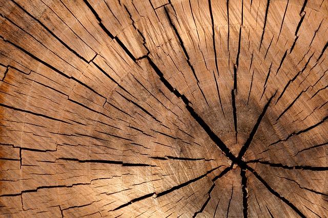 El sector forestal prevé crecimiento en la Certificación