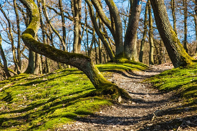Los montes comunales tienen cuatro años para reinvertir sus ingresos en planes forestales