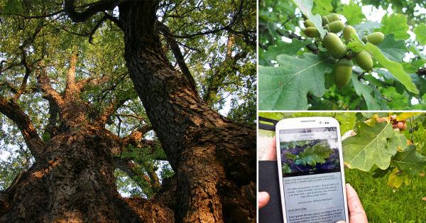 Arbolapp: una aplicación para identificar árboles