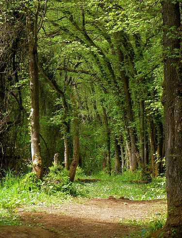 Certificación forestal, la solución para los propietarios particulares